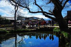 忍野村を訪ねて...湧池に映り込むpeople ①