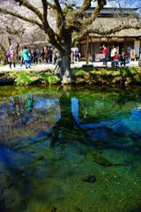 忍野村を訪ねて...清らかな湧池に映り込む