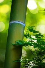 和のグリーンテイスト~竹と青もみじ