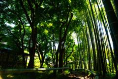 緑の光に癒されて...竹の小径