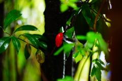 雨に濡れて光る紅一点~春の優しい光に包まれて~②