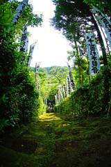 苔の階段…グリーンワールド ②