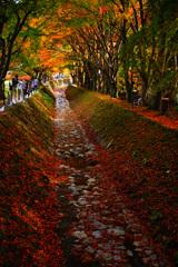 河口湖で紅葉狩り~もみじ回廊 ③