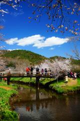 忍野村を訪ねて...桜と清らかな水 ②