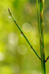 濡れ光る朝の宝石たち ①