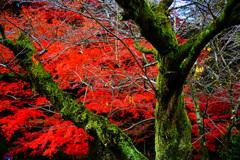深緑と深紅に魅せられて ②