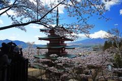 新倉山浅間公園で春の一日を…⑥