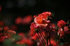 プリンセス ミチコ 2016 5/15 DSC08732
