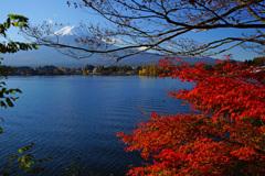 ぶらっと秋散歩~河口湖 ②