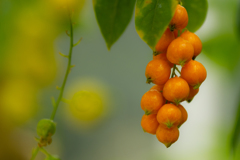 鮮やかオレンジ