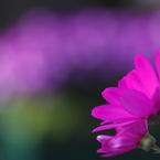CANON Canon EOS 70Dで撮影した(花 その20)の写真(画像)