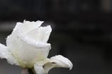 花 その59