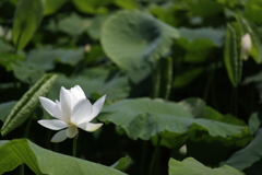 花 その83