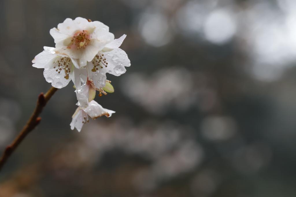 花 その62