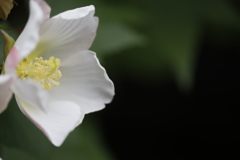 花 その98