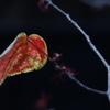 葉っぱ その3
