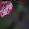 葉っぱ その4