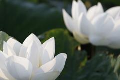 花 その88