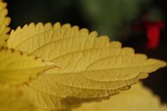 葉っぱ その1