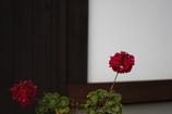 花 その49