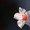 花 その51