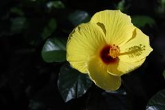 花 その82