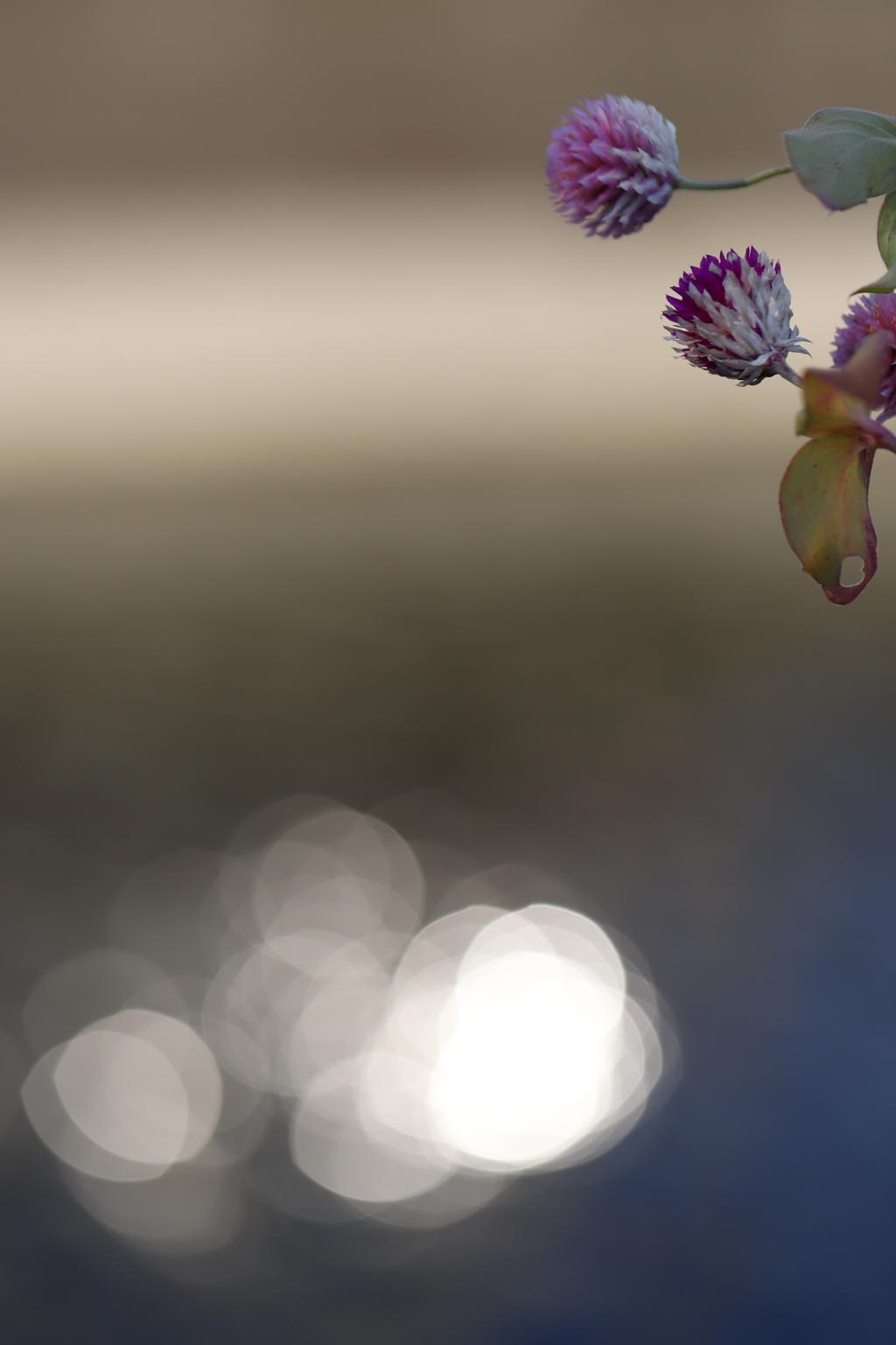 花 その58