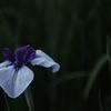 花 その29