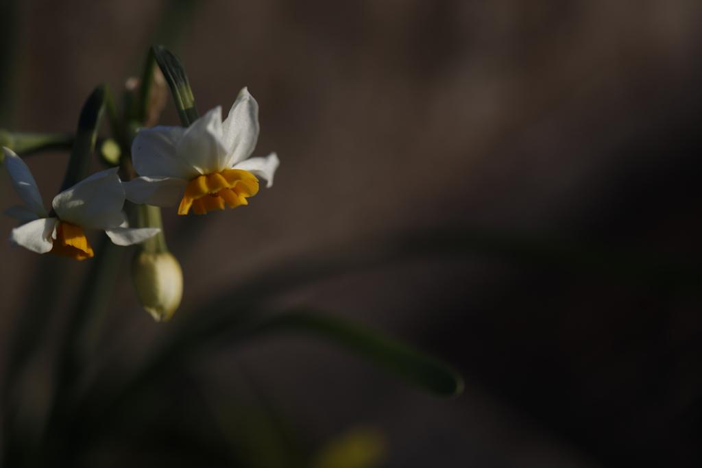 花 その60