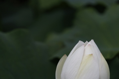 花 その85