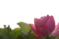 花 その87
