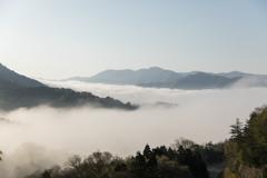 霧を上から見たもの
