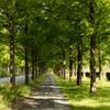 メタセ並木の歩道