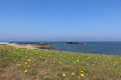 たんぽぽ咲く塩屋漁港