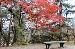 長椅子と紅葉(西山公園より)