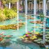 モネの池のカフェテラス(鳴門市観光より)