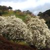 モクレン咲く丘
