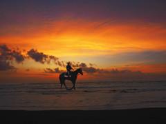 馬と朝焼け