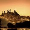 岩礁の海鵜