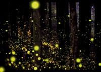 OLYMPUS E-M1MarkIIで撮影した(森の舞姫)の写真(画像)
