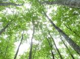 夏の美人林