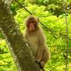 猿との遭遇