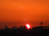 東京タワーと3羽の朝