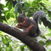 木の上だと安心して食べれるよ!
