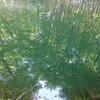 新緑の水鏡