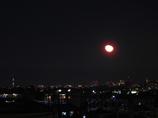 ツリーと月とタワー