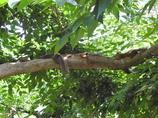 リスのなる木