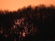 林に囚われた太陽