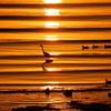 波紋と光が創るドラマ