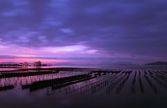 雲広がる寒い朝の牡蠣棚